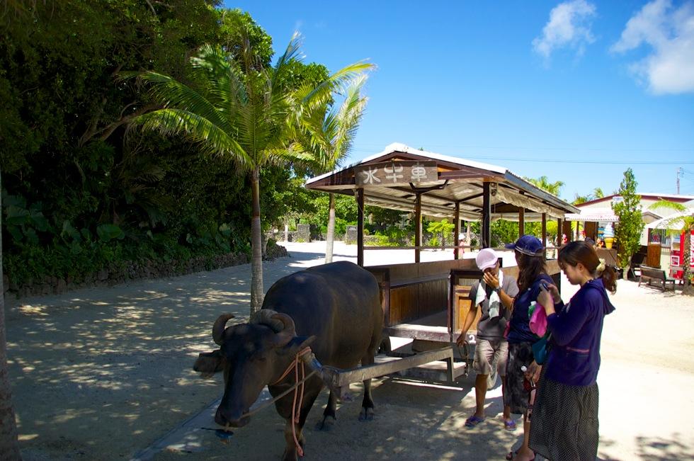 竹富島の原風景が残る集落をのんびり巡る水牛車観光