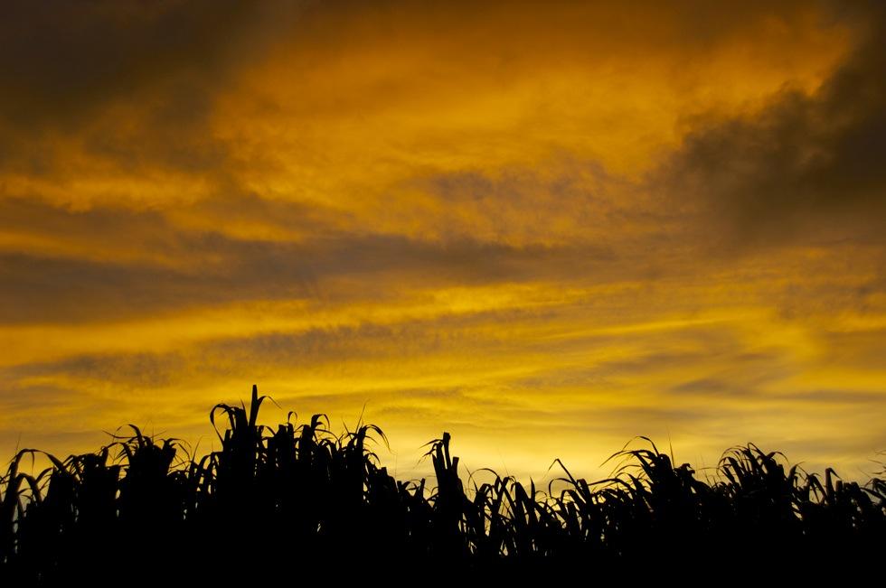 宮古島 さとうきび畑の夕日