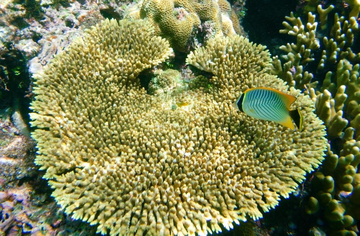 吉野海岸はたくさんの珊瑚と魚に会える一番のシュノーケルスポット