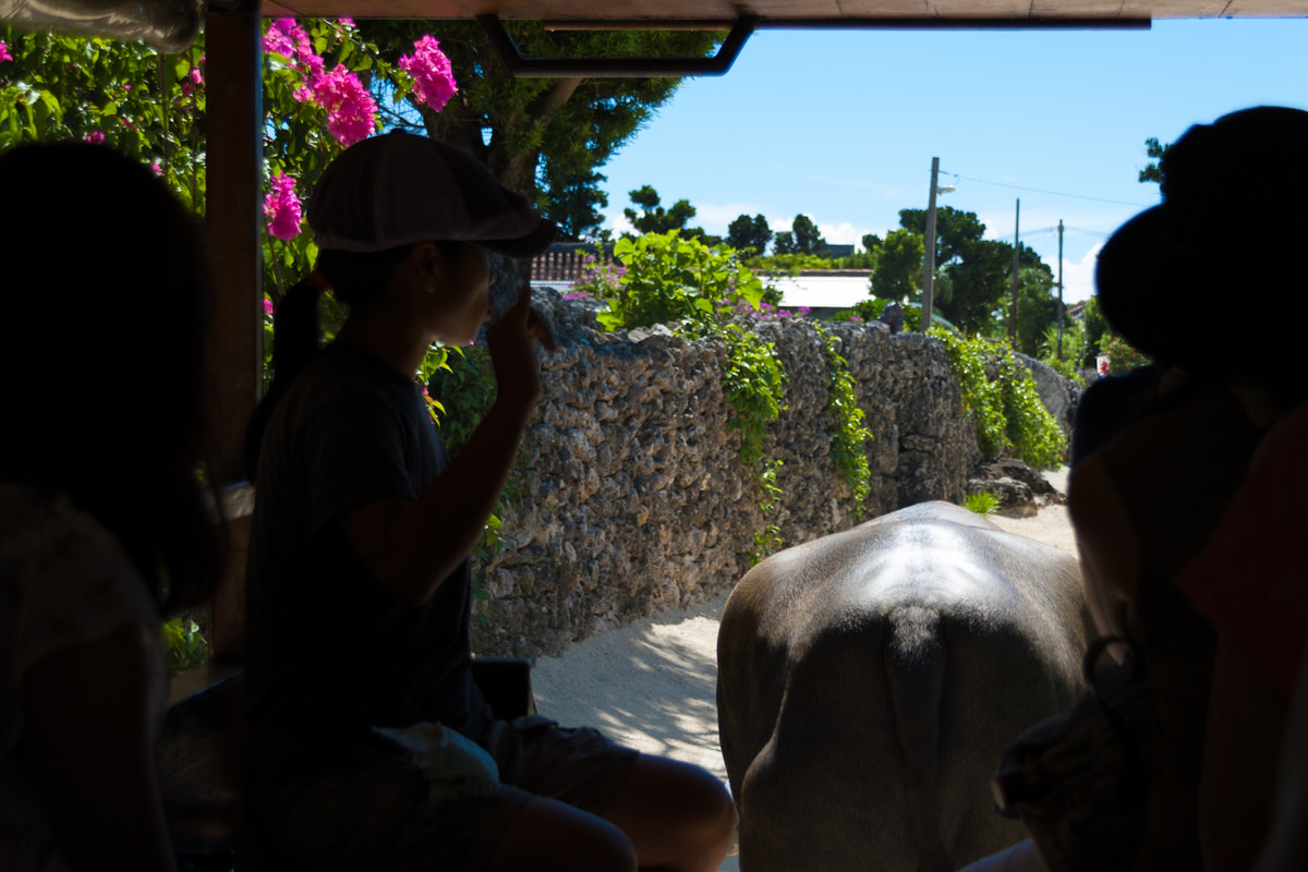 竹富島 水牛車観光