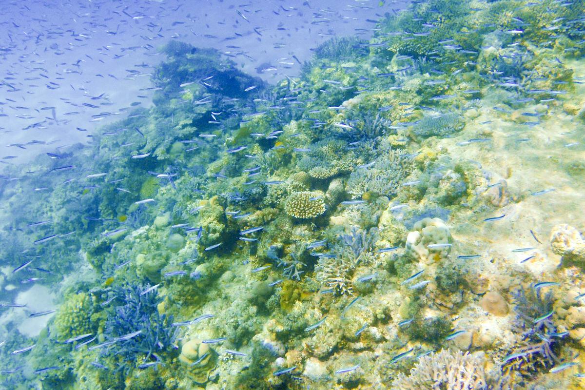 慶良間諸島、世界が恋する阿嘉島の海へ