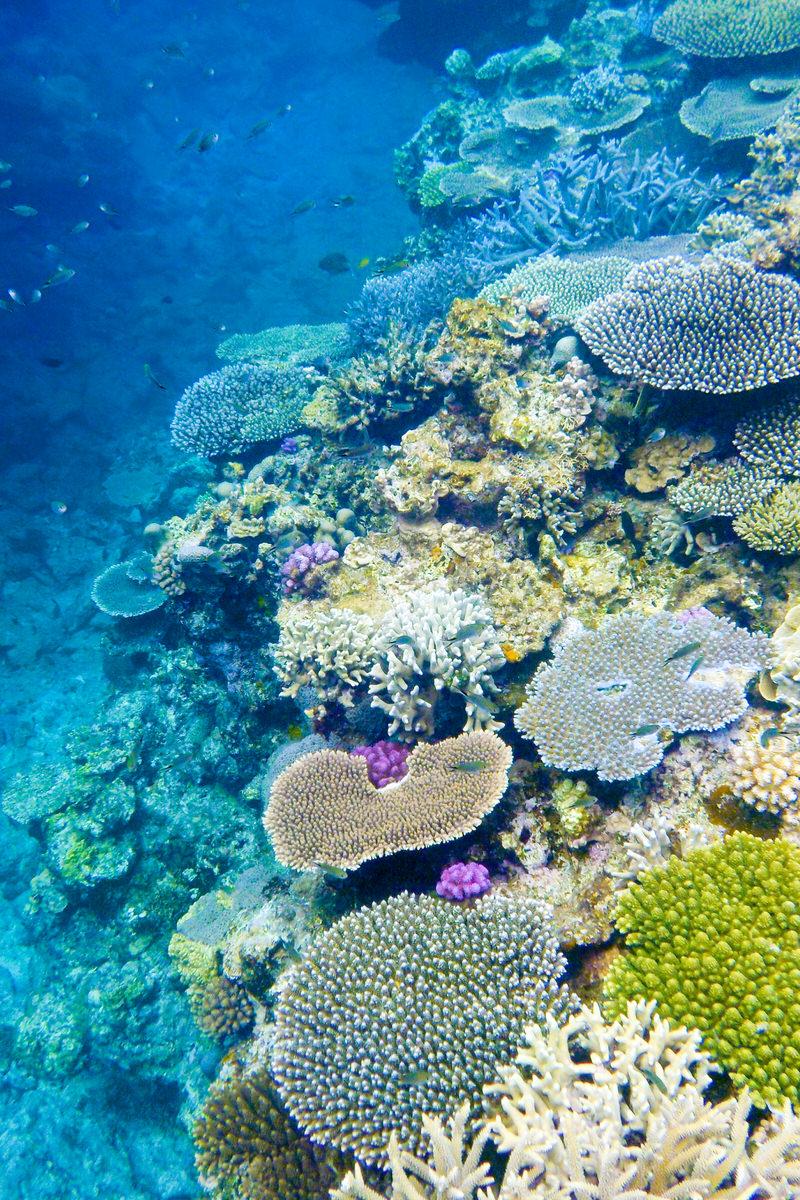 慶良間諸島 阿嘉島 珊瑚