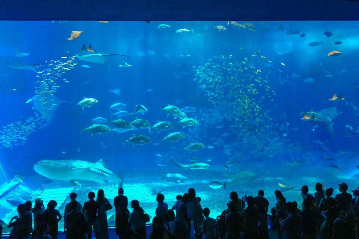 世界最大級の大水槽「黒潮の海」が有名な沖縄美ら海水族館へ。