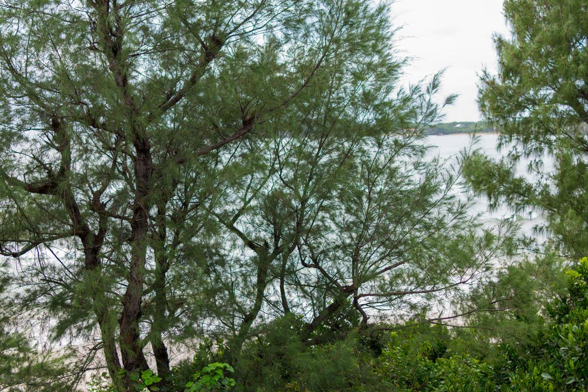 西表島 ニライカナイ トゥドゥマリの浜