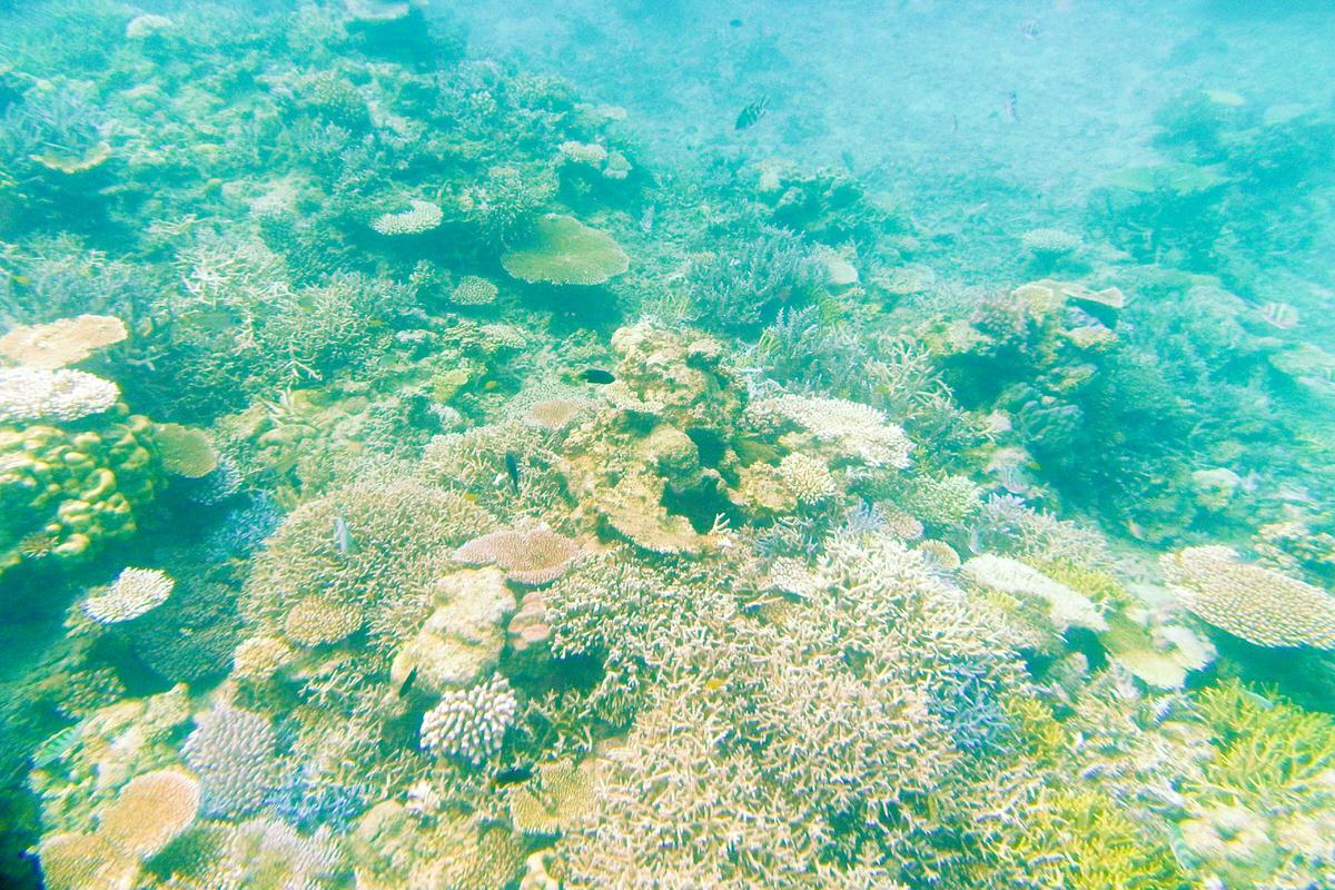 西表島 イダの浜 珊瑚