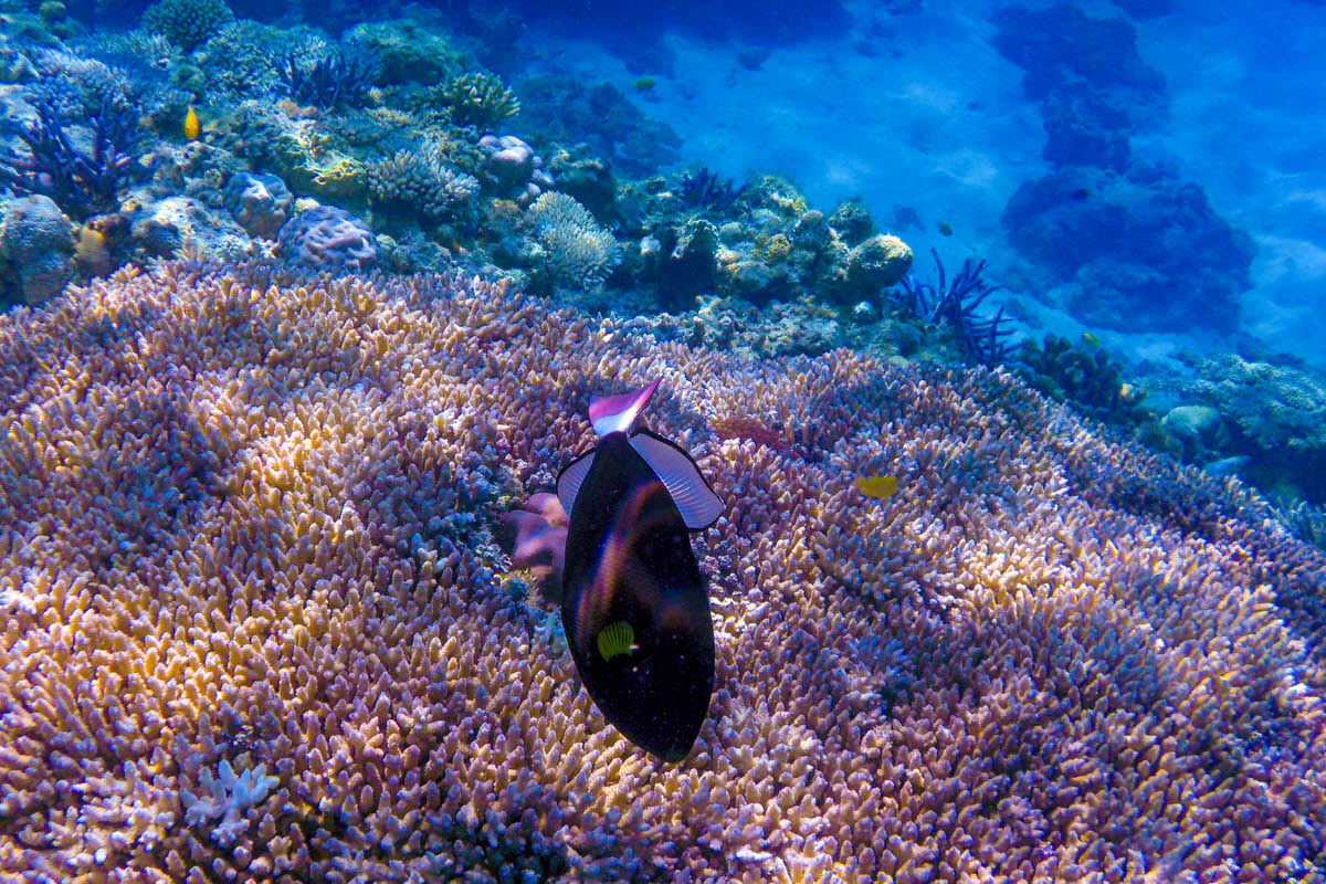 阿嘉島 ニシハマビーチ サンゴ