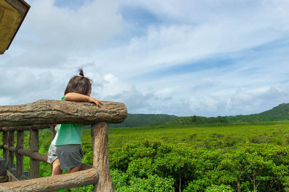「浦内川の展望台」西表島ならではの広大なマングローブ林。