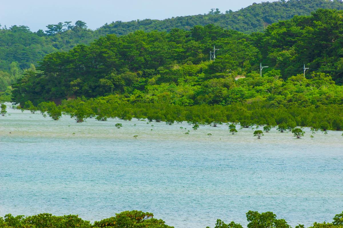 浦内川展望台 西表島