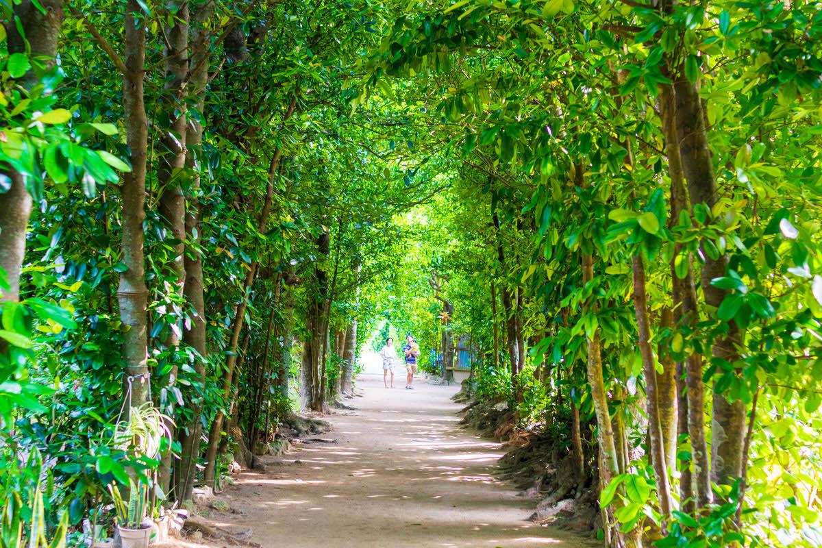 備瀬 フクギ並木、癒やしの場所を歩く