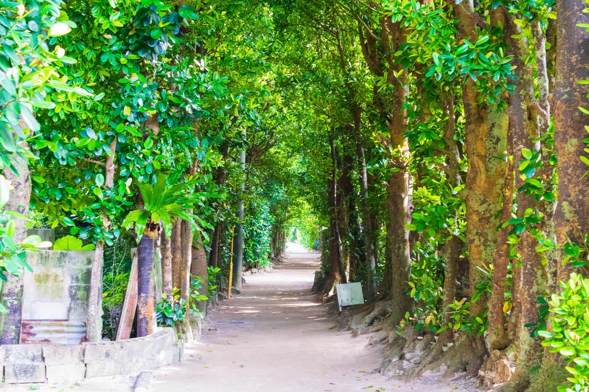 沖縄本島 備瀬 フクギ並木